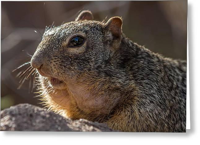 Rock Squirrel Greeting Card by Beverly Parks