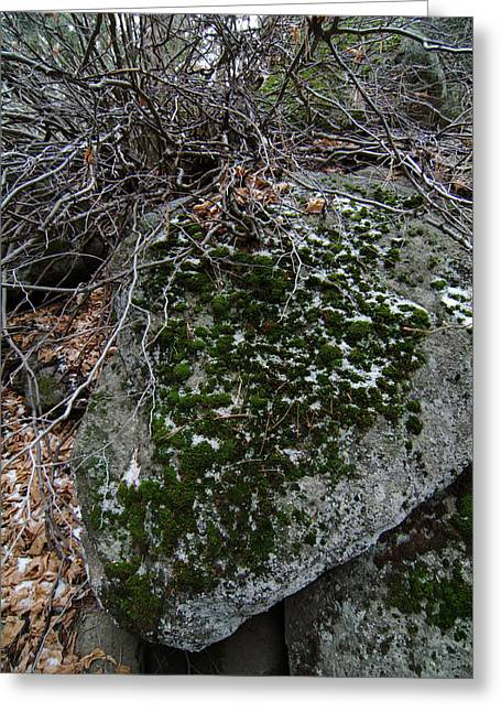 Rock With Lichen And Snow Greeting Card