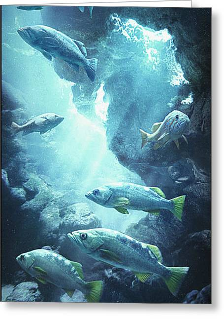 Rockfish Sanctuary Greeting Card by Javier Lazo
