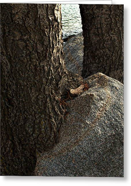 Rockin Tree Greeting Card