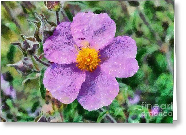 Rockrose Wild Flower Greeting Card by George Atsametakis