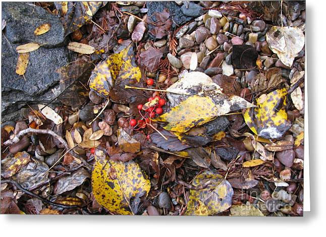 Rocks And Berries Greeting Card by Leone Lund