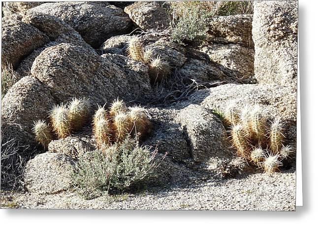 Rocks And Cactus Greeting Card by Deborah Smolinske