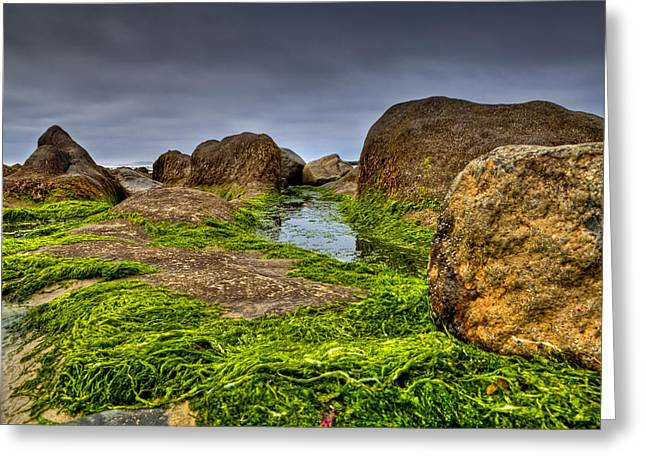 Rocks And Seaweed Greeting Card