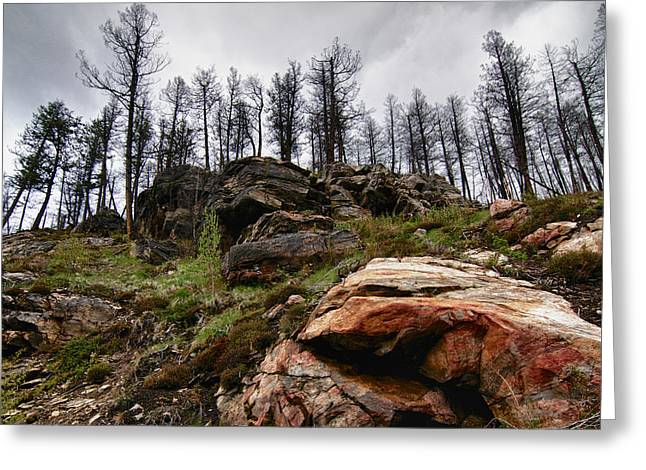 Greeting Card featuring the photograph Rocks And Trees 2 by Trever Miller