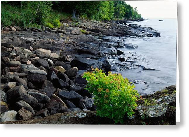 Rocks And Trees Along Lake Superior Greeting Card by Panoramic Images