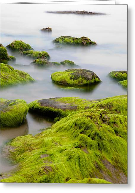 Rocks Or Boulders Covered With Green Seaweed Bading In Misty Sea  Greeting Card by Dirk Ercken