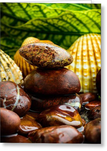 Rocks Shells And Leaves Greeting Card by Marco Oliveira