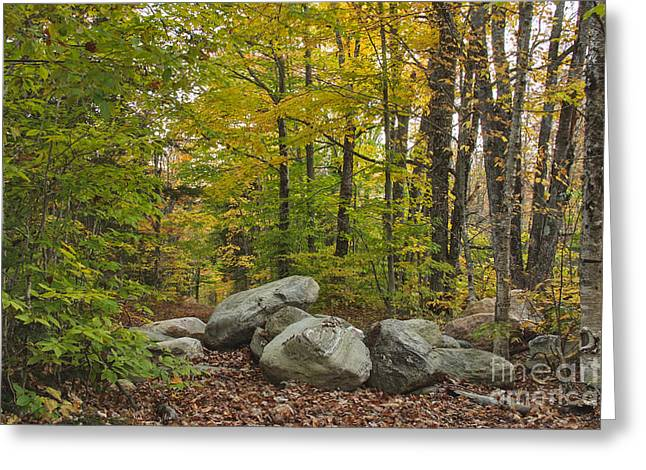 Rocky Forest Path Greeting Card