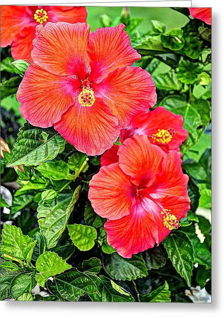 Rocky Hill Hibiscus Greeting Card