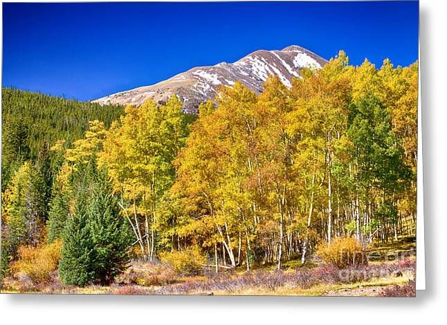 Rocky Mountain Autumn Bonanza Greeting Card by James BO  Insogna