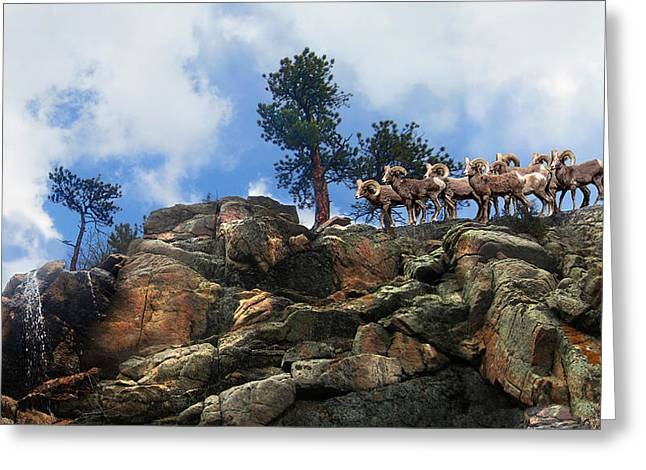Rocky Mountain Big Horn Herd Greeting Card by Ric Soulen