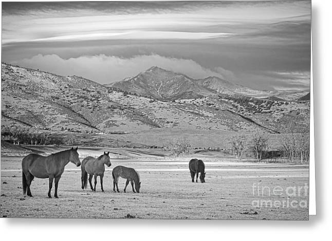 Rocky Mountain Country Morning Bw Greeting Card by James BO  Insogna