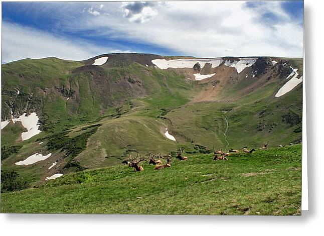 Rocky Mountain National Park Elk Greeting Card by Julie Magers Soulen