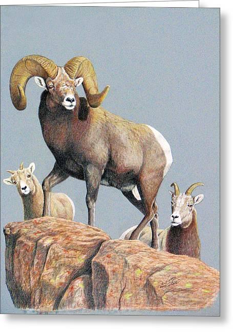 Rocky Mountain Ram Ewe And Lamb Greeting Card