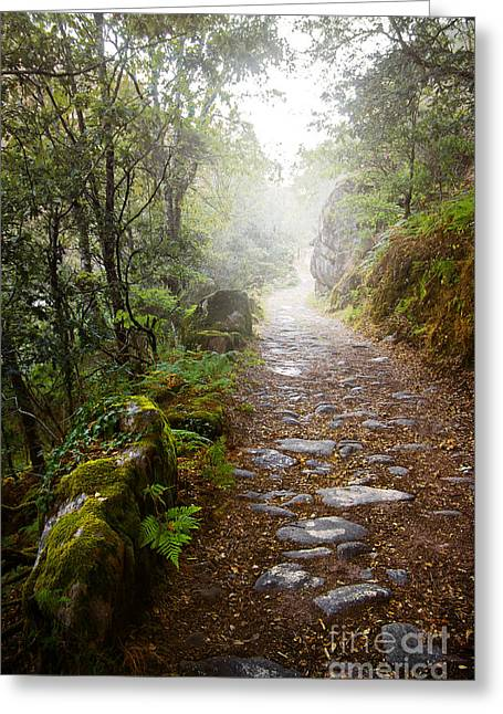 Rocky Trail In The Foggy Forest Greeting Card