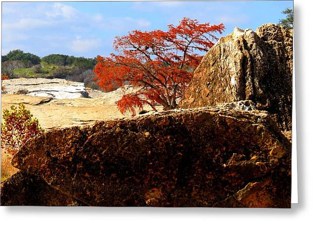 Rocky Tree Greeting Card by David  Norman