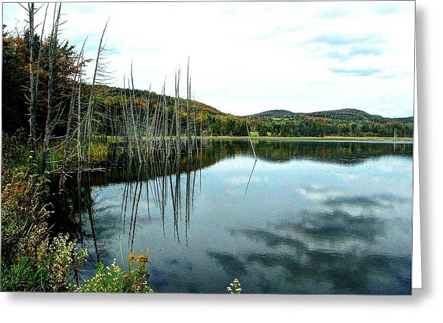 Rodgers Pond Greeting Card by John Nielsen