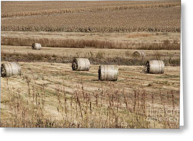 Roll On The Hay Greeting Card by Taschja Hattingh