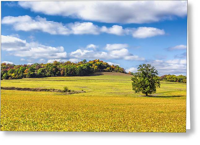 Rolling Fields Of Color Greeting Card by Bill Tiepelman