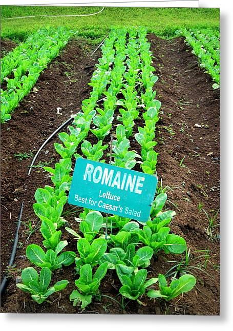 Romaine Greeting Card by GypsyBfly