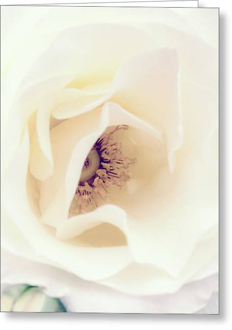 Romance In A Rose Greeting Card