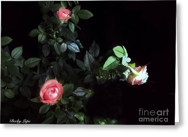 Romance Of The Roses Greeting Card