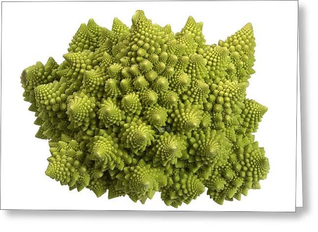 Romanesco Cauliflower (brassica Greeting Card by Science Photo Library