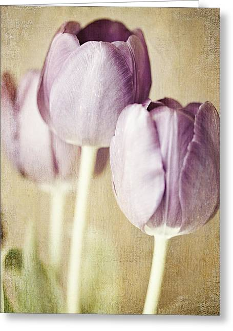 Romantic Pastel Purple Tulips Greeting Card