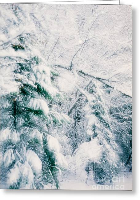 Romantic Winter Snowfall In Forest Greeting Card by Stephan Pietzko