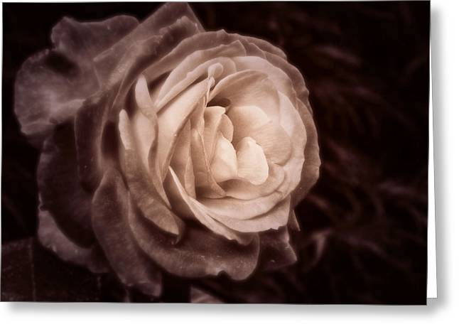 Romantica Greeting Card by Mary Zeman