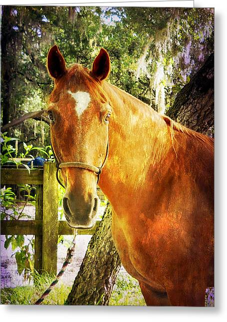 Romeo Greeting Card by Judy Hall-Folde