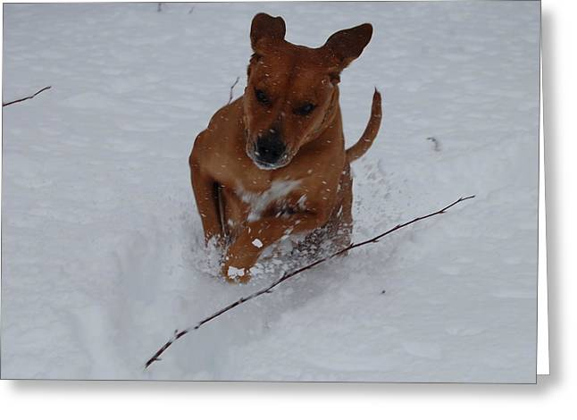 Greeting Card featuring the photograph Romp In The Snow by Mim White