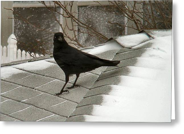 Roof Crow Greeting Card