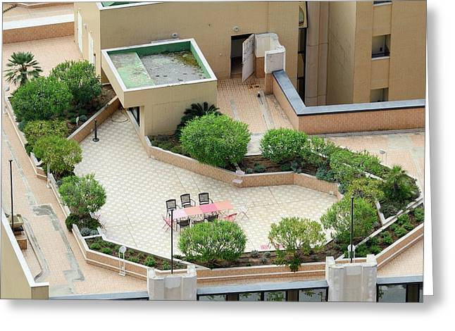Rooftop Garden Greeting Card by Chris Hellier