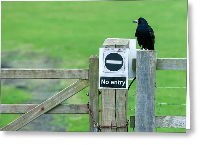 Rook On Guard Greeting Card