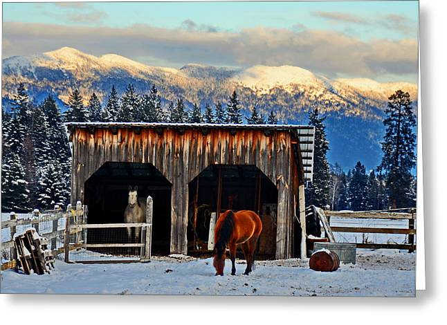Room With A View Greeting Card by Annie Pflueger