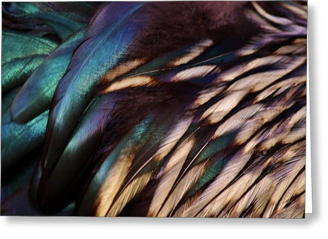Rooster Feathers Greeting Card by Paulette Thomas