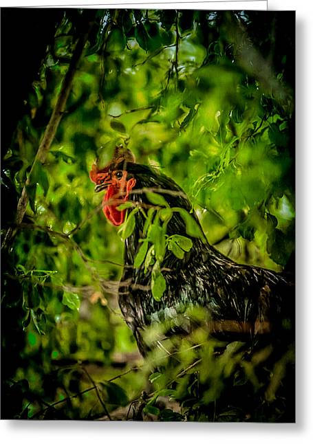 Rooster In A Tree Greeting Card