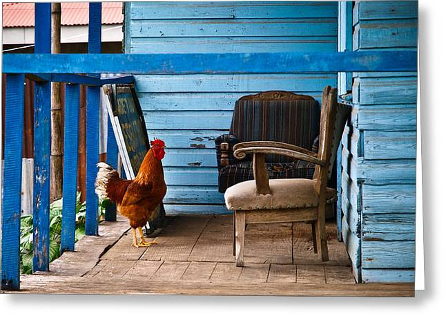Rooster On Porch  Greeting Card by Robert Watcher