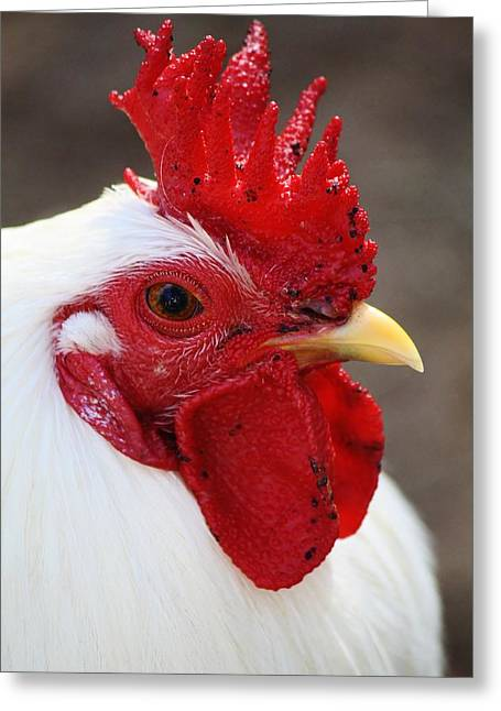 Rooster Greeting Card by Paulette Thomas