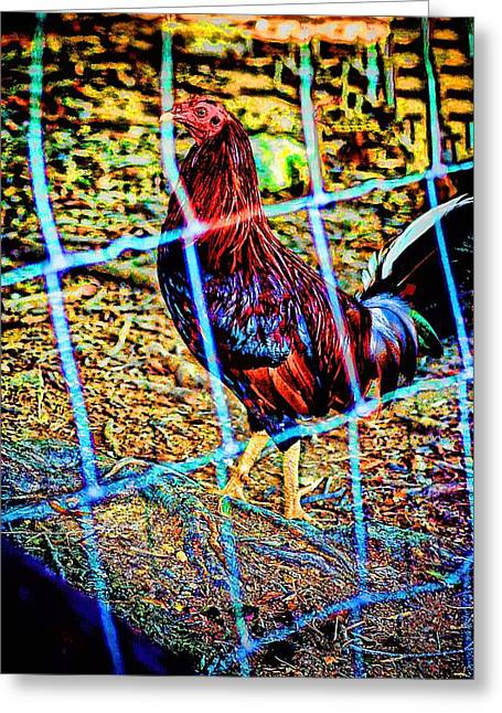 Rooster Red Art Greeting Card