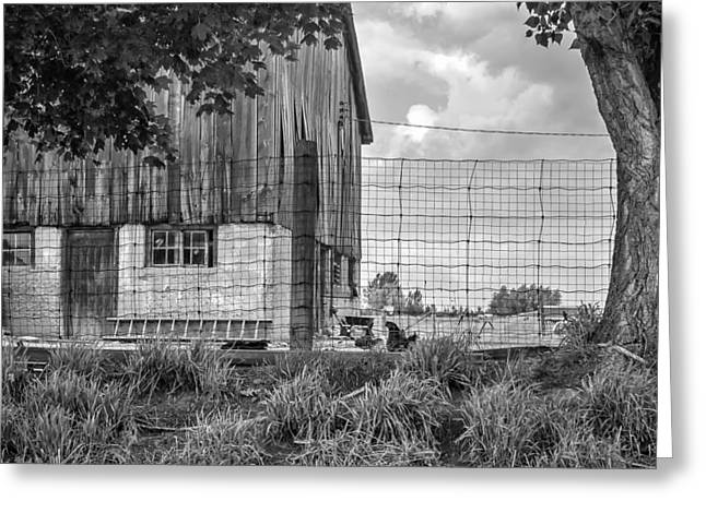 Rooster Turf Monochrome Greeting Card by Steve Harrington