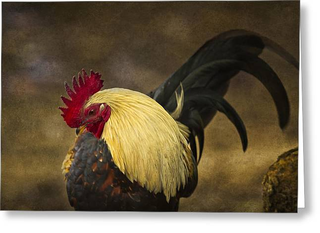 Rooster With Blond Mane - Kauai - Hawaii Greeting Card by Belinda Greb