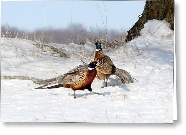 Roosters Greeting Card by Lori Tordsen