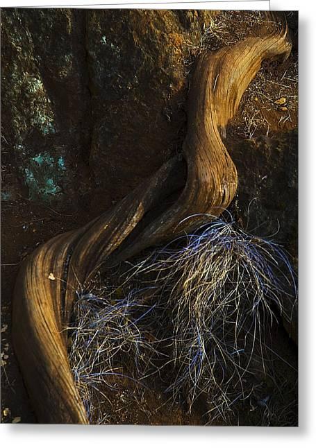 Tree Root Greeting Card