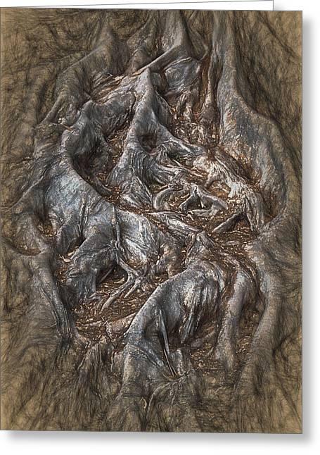 Roots Greeting Card by John Haldane