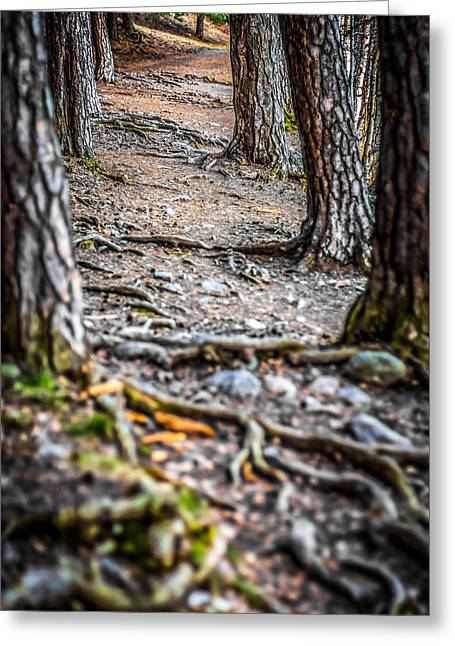 Greeting Card featuring the photograph Rootway by Matti Ollikainen