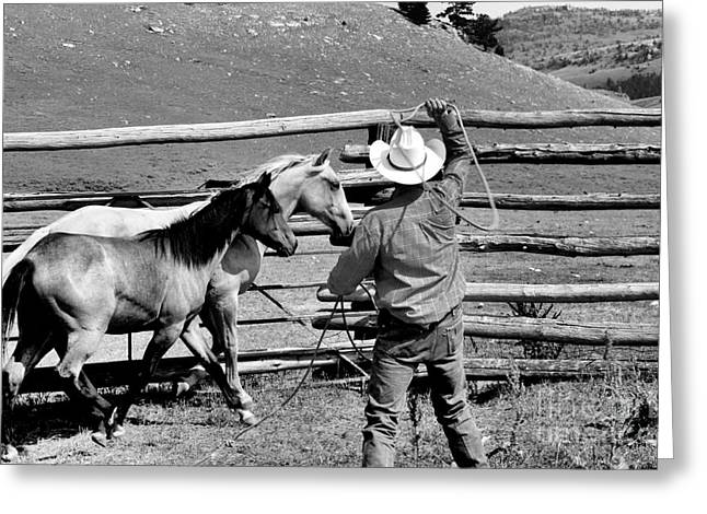 Roping The Young Ones Greeting Card