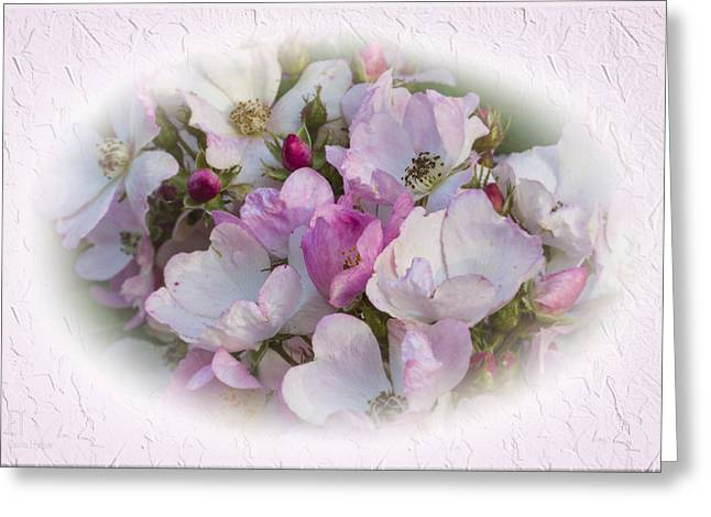 Rosa Greeting Card by Elaine Teague